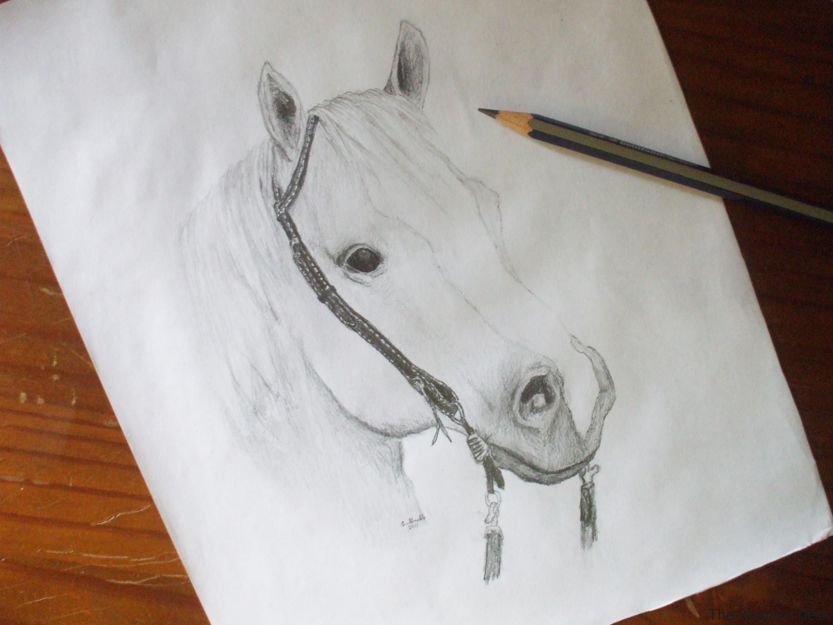 If you have ever looked at a horse in real life you will see that the middle area of a horses body is roundlike a barrel